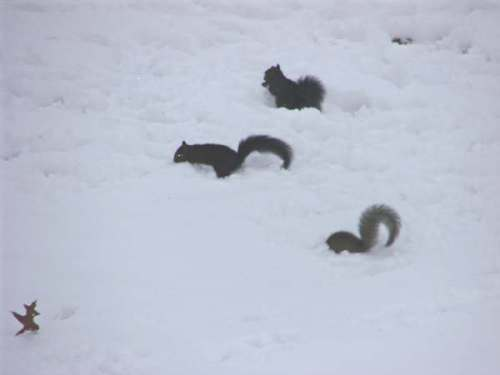 esquilos.jpg